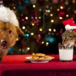 pets-and-holiday-food
