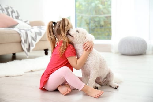 A little girl sitting with her hypoallergenic dog in a living room.