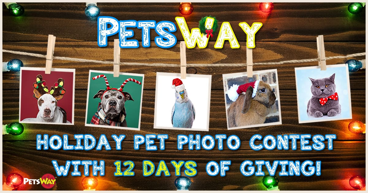 PetsWay 12 Days of Giving Pet Photo Contest